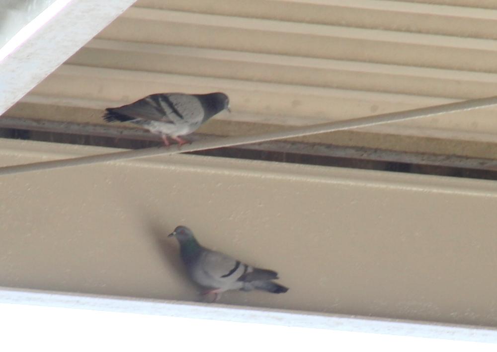倉庫の天井付近や壁際は鳩にとって落ち着くスポット!鳥は雨風を防げるところを好んで巣を作ります。